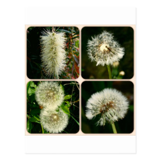 Dandelion Flower Collage Postcards