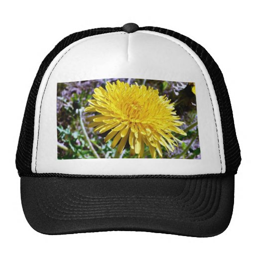 Dandelion Flower In Grass Mesh Hat