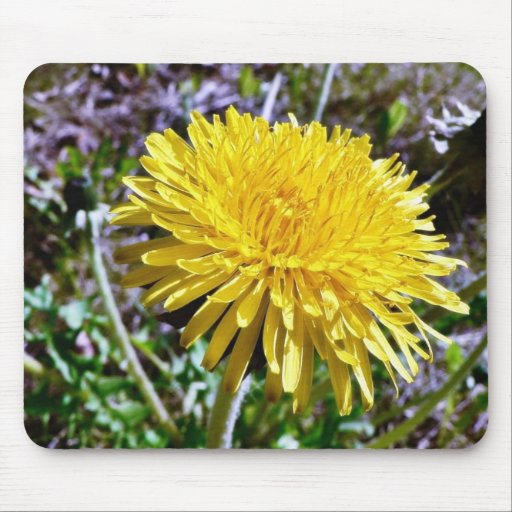 Dandelion Flower In Grass Mouse Pad