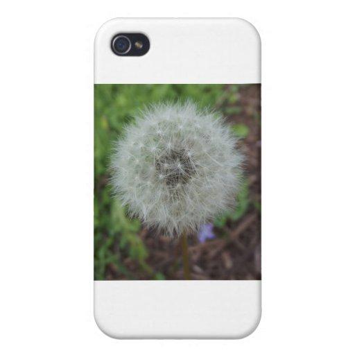 dandelion flower case for iPhone 4