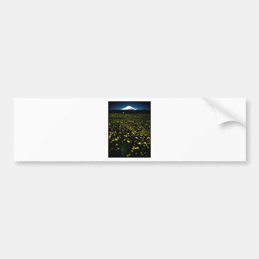 dandelion flower mountain car bumper sticker