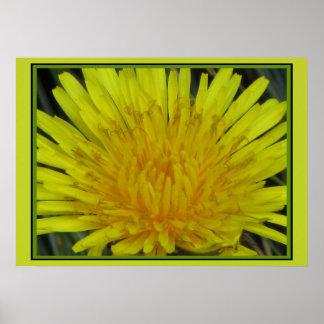 Dandelion Flower Print