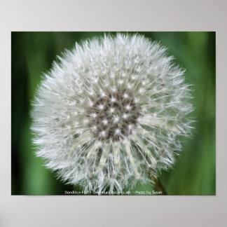 Dandelion Fluff Macro Flower Photography Poster