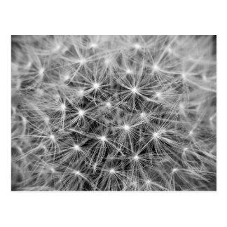 Dandelion Fluff Macro Postcard