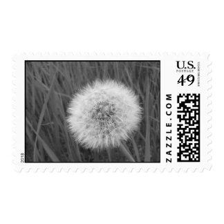 Dandelion Fluff Stamps