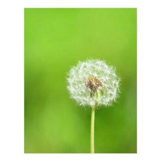 Dandelion Flyer