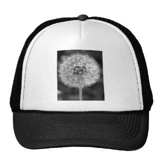 Dandelion Gone to Seed Trucker Hat