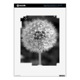 Dandelion Gone to Seed iPad 3 Decals