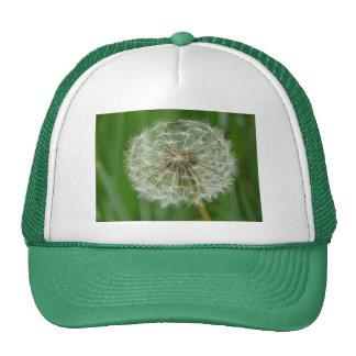 dandelion trucker hat