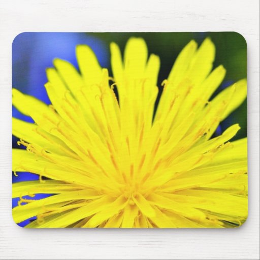 Dandelion In Blossom Mouse Pads