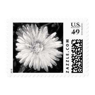 Dandelion in Disguise Postage Stamp