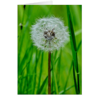 Dandelion in the Grass - Greeting Card