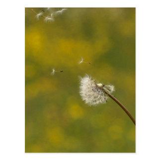 Dandelion in the wind postcard