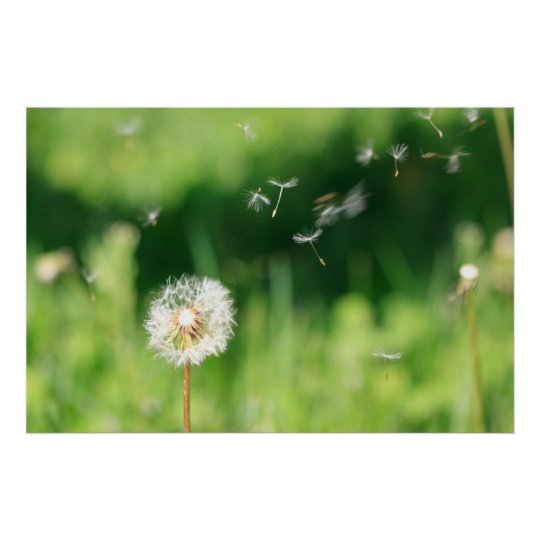 Dandelion in the Wind Poster