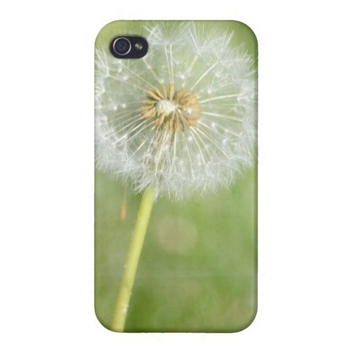 Dandelion Covers For iPhone 4