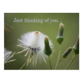 Dandelion, Just thinking of you... Postcard