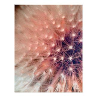 Dandelion Letterhead Template