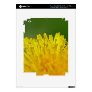 Dandelion, Löwenzahn, Pusteblume iPad 3 Skin
