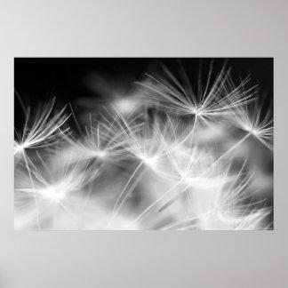 Dandelion macro beauty print