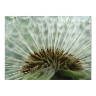 Dandelion Macro Card
