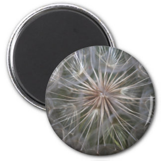 Dandelion Magnet