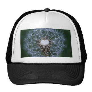 Dandelion no.1 phtographed by Tutti Trucker Hat
