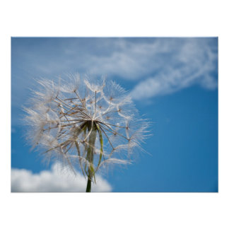 Dandelion on the wind poster