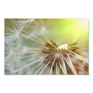 dandelion photo print