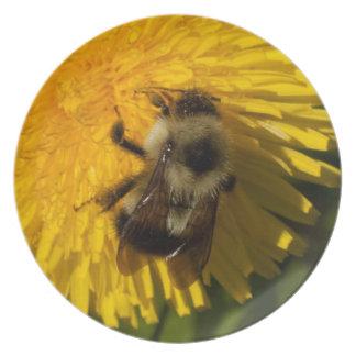 Dandelion Pollenator Melamine Plate