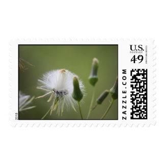 Dandelion Postage