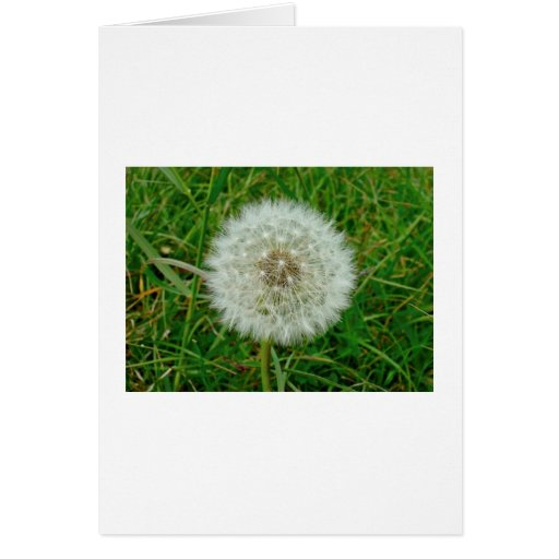 Dandelion Products Greeting Card