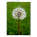 Dandelion Puff Card