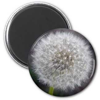Dandelion Puff Magnet