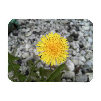 Dandelion Rectangular Photo Magnet