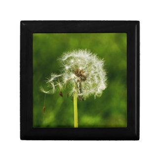 Dandelion seed gift box