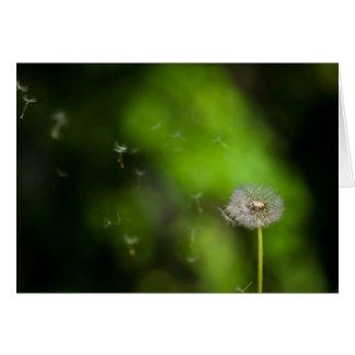 Dandelion seed head and wind blown seeds card