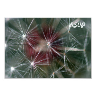 Dandelion Seed Head Card