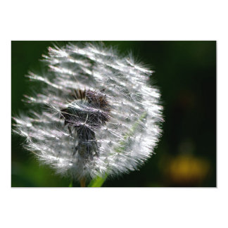 Dandelion Seed Head - Invitation