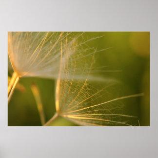Dandelion seed macrophotography poster