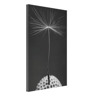 Dandelion Seed Photo on Canvas