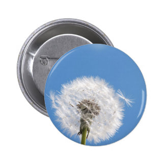 Dandelion seed pinback button