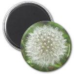 Dandelion Seedhead 2 Inch Round Magnet