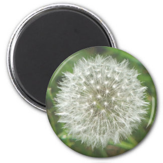 Dandelion Seedhead Refrigerator Magnets