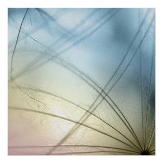 Dandelion seeds affiche