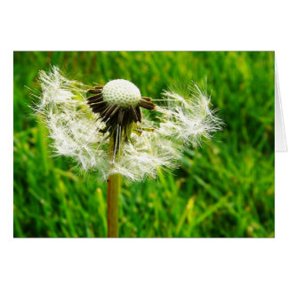 Dandelion Seeds and Bright Green Grass Card