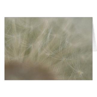 Dandelion Seeds Card