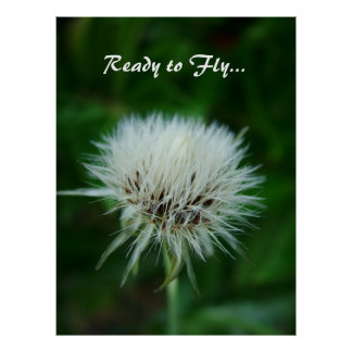 dandelion seeds head, ready to fly poster