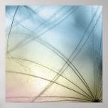 Dandelion seeds impresiones
