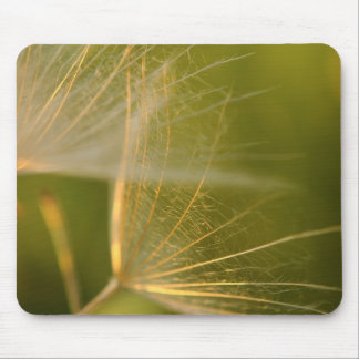 Dandelion seeds macrophotography mouse pad