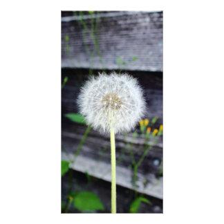 Dandelion Seeds Near Wood Planks. Card